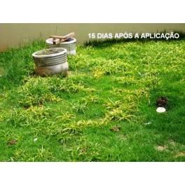 Acabe Com as Tiriricas de seu gramado